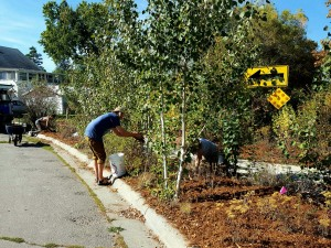 Volunteers mulching at the 8th Street Pocket Park in Missoula