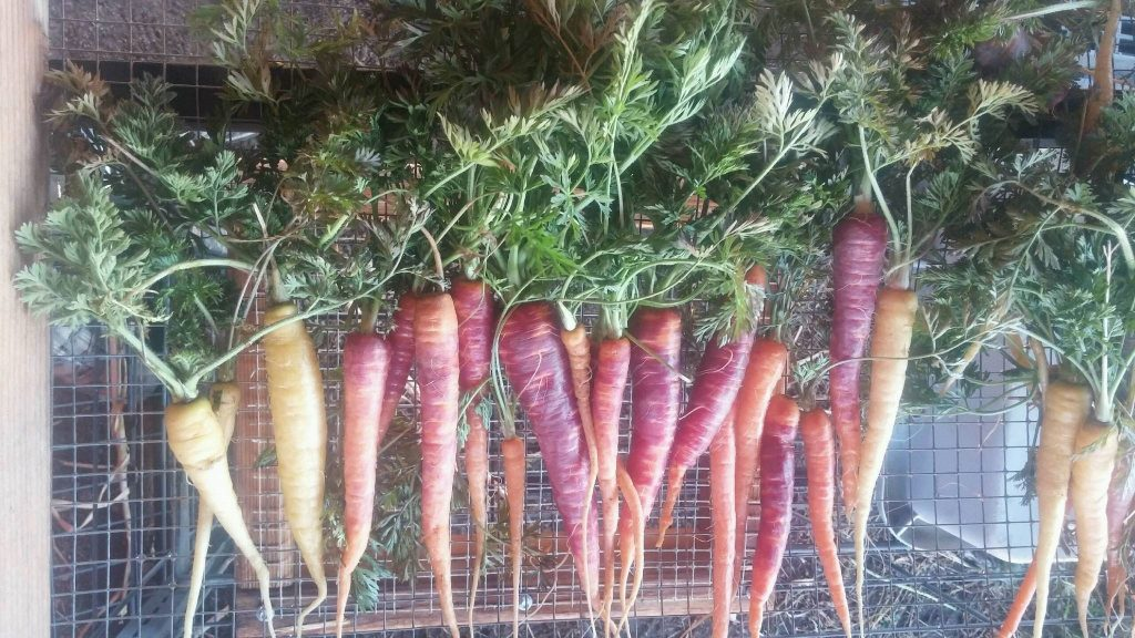 Fairy Carrots and Becoming a Kid Again – Energy Corps